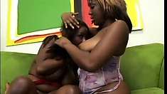 Chubby lesbian ebony babes with big tits munch and toy their cunts